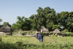 Adjumani and Moyo refugee camps.